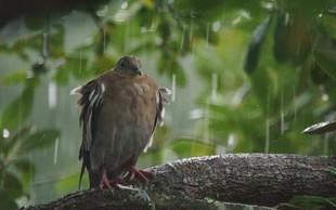 8 čudovitih zgodb reševanja živali po razdejanju orkana Harvey!