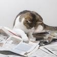 Kako tona starega papirja pomaga živalim?