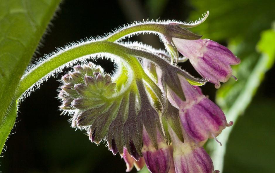 Gabez: Rastlina, ki varuje (foto: Profimedia)