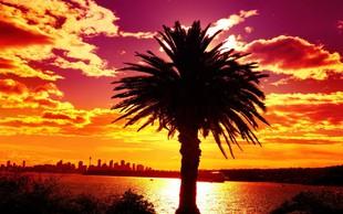 Sydney naj bi se leta 2050 pregreval pri 50 stopinjah Celzija