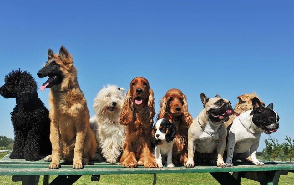 Katera pasma psa je najprimernejša za vaše horoskopsko znamenje? (foto: Profimedia)