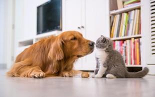 Raziskava: Ljudem so bolj pri srcu psi kot pa drugi ljudje!