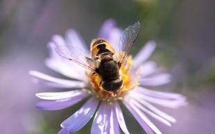 Danes obeležujemo svetovni dan čebel