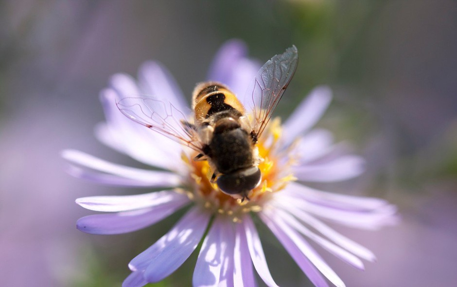 Danes obeležujemo svetovni dan čebel (foto: Profimedia)