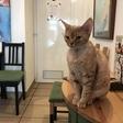 Znamenita mačja kavarna Cat Caffe v Ljubljani s februarjem zapira vrata