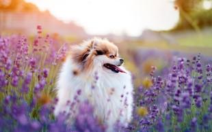 Na homeopatsko zdravljenje se dobro odzivajo vse vrste živali