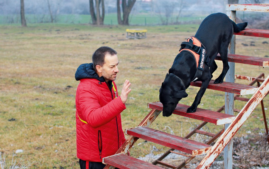 Vzgoja reševalnih psov: Vse se začne pri starosti štirih mesecev (foto: Goran Antley)