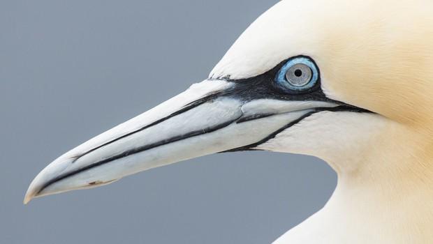 Poginil je 'najbolj osamljen ptič na svetu' in svet je ganjen! (foto: profimedia)
