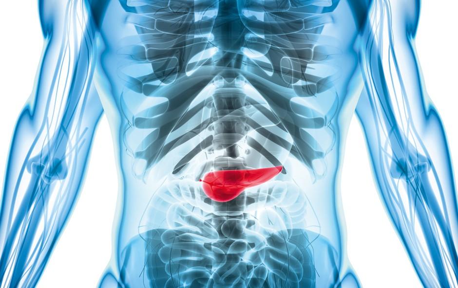 Rak na trebušni slinavki - ubijalec, ki pride čisto tiho (foto: Shutterstock)