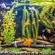 Akvarij - naj bo dobro vzdrževan in prava oaza za ribe