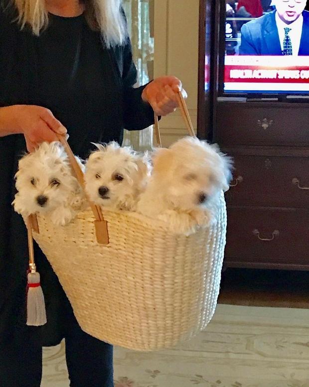 Barbra Streisand je klonirala svojo psičko (foto: profimedia)