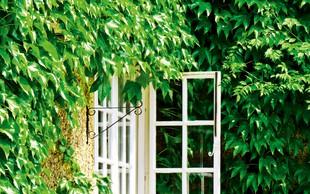 Individualno oblikovanje vrta: Ne zadovoljite se z običajnimi rešitvami