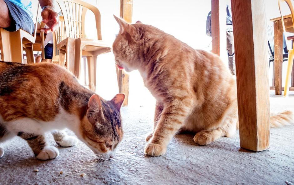 Na Cipru našteli 1,5 milijona mačk, kar je več kot prebivalstva! (foto: profimedia)