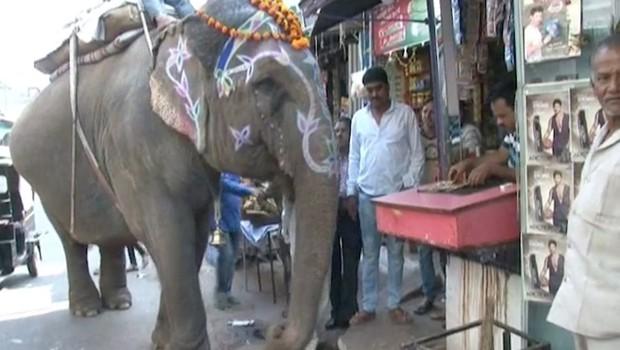 Znanstvenike bega slonica v indijskem gozdu, ki 'kadi' (foto: profimedia)