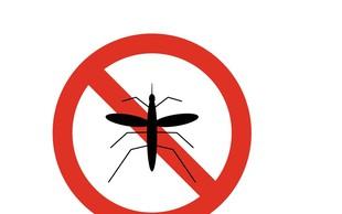 V Zagrebu se soočajo s pravo invazijo komarjev