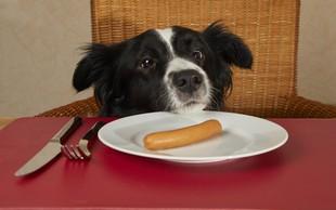 Raziskovalci trdijo, da je pes sposoben lagati človeku, da le dobi, kar želi