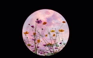 Majska polna luna je cvetna luna