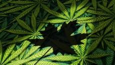 V Zagrebu obsodili žensko zaradi nošenja majice z listom marihuane