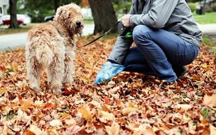 Koprofagija je pogosta zlasti pri psih - kako nad njo?