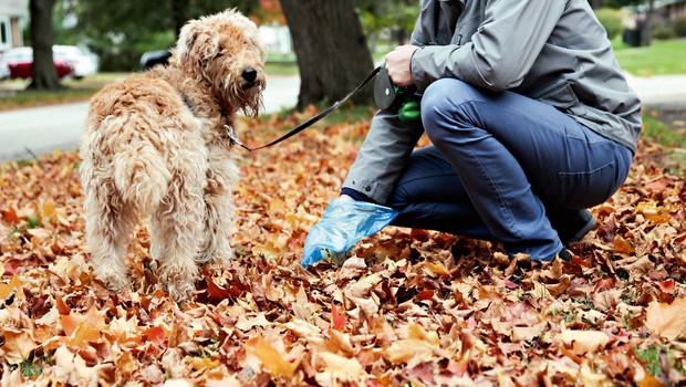 Koprofagija je pogosta zlasti pri psih - kako nad njo? (foto: Shutterstock)