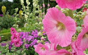 Poletna zeliščna apotekarna: Spoznajte koristne rastline!
