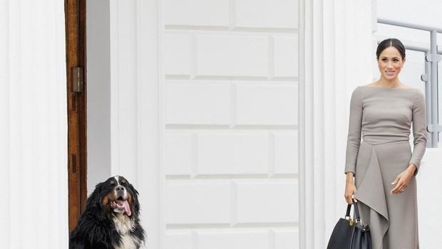 Princ Harry in Meghan Markle posvojila prikupnega kosmatinca (foto: Profimedia)