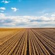 Resničnostni šov Kmetija: Babji ravs ali petelinji boj?