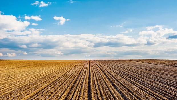 Resničnostni šov Kmetija: Babji ravs ali petelinji boj? (foto: Shutterstock)