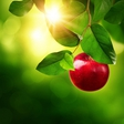 Nina Kasandra Klun: Jabolko za mladost in ljubezen
