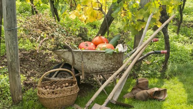 Pravočasna zaščita vrta pred mrazom (foto: SHUTTERSTOCK)