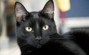 Simbolni pomen črne mačke: So znak zaščite in ustvarjalnosti