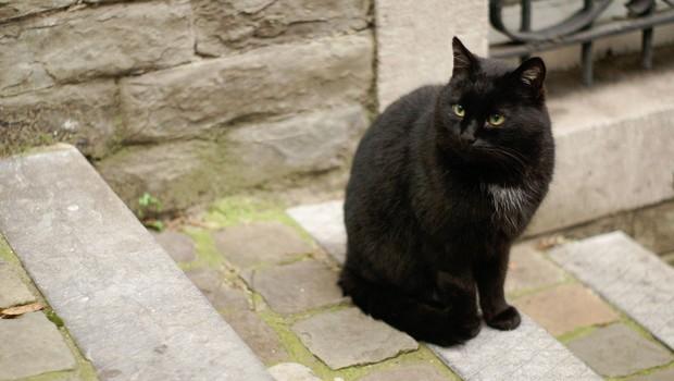 Simbolni pomen črne mačke, ki se pojavi pred vašimi vhodnimi vrati