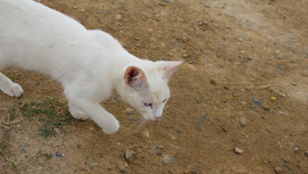 Simbolni pomen bele mačke, ki vam prekriža pot (foto: profimedia)