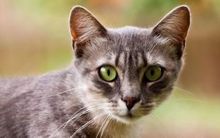 Simbolika mačk: Kaj predstavljajo mačke v spiritualnem svetu?