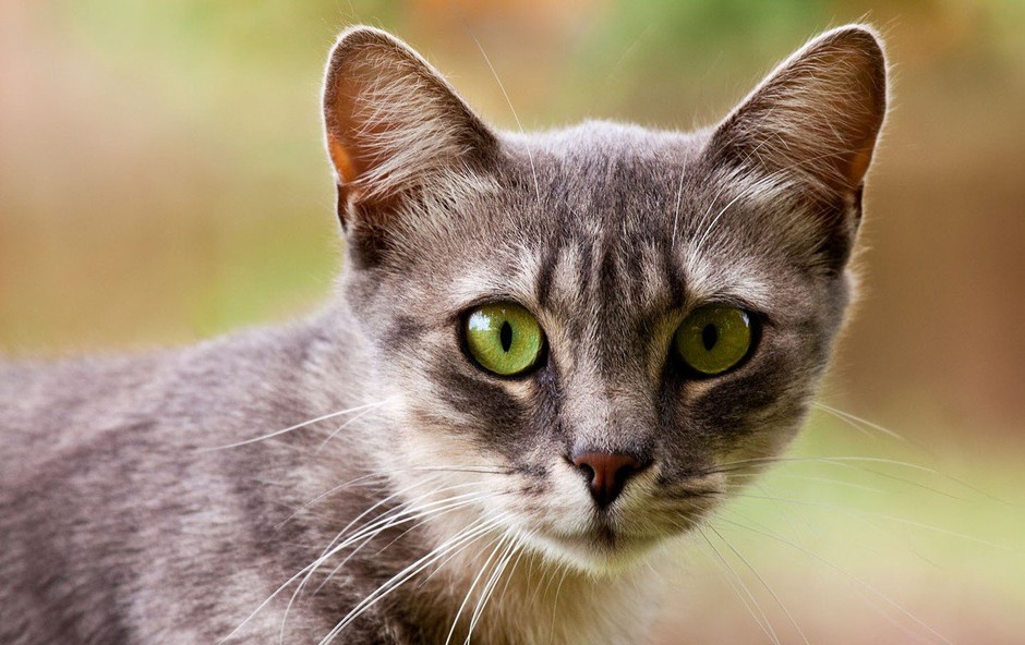 Simbolika mačk: Kaj predstavljajo mačke v spiritualnem svetu? (foto: profimedia)
