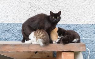 Stereotipi o mačkah: Ste med tistimi, ki verjamejo vanje? No, to je povsem nepotrebno!
