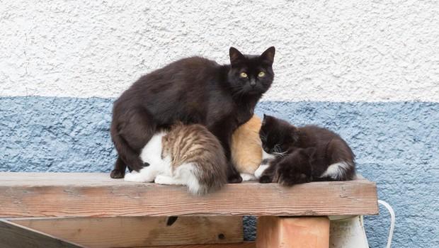 Stereotipi o mačkah: Ste med tistimi, ki verjamejo vanje? No, to je povsem nepotrebno! (foto: profimedia)