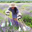 Polonca Lovšin na razstavi tematizira ogroženost čebel