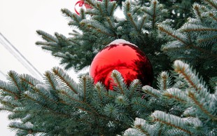 V Celovcu čez noč ukradli več kot 40 božičnih dreves!