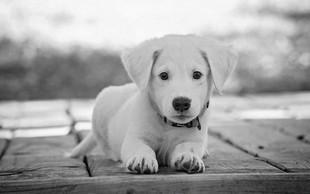V Kaliforniji bodo odslej v trgovinah z ljubljenčki na voljo le še rešene živali