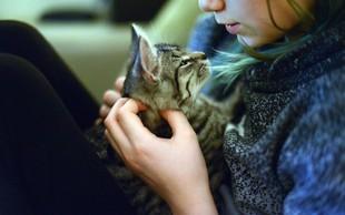 Pogrešano mačko našli 1600 kilometrov stran od doma