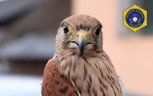 Zavarovano ptico postovko policisti rešili iz ujetništva