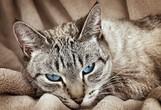 Razlaga sanj: Mačka ima vrsto pomenov, odvisnih od vašega odnosa do živali!