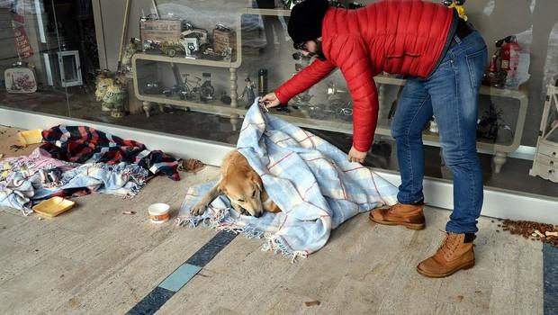 Turški zobozdravnik v mrzlem Istanbulu zavija potepuške pse in mačke v odeje (foto: profimedia)