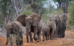 Razlaga sanj: Slon je znamenje ponosa, moči in dostojanstva!