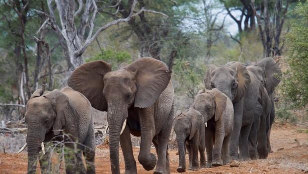 Razlaga sanj: Slon je znamenje ponosa, moči in dostojanstva! (foto: profimedia)