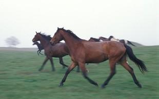 Razlaga sanj: Konj je znamenje človekove zmožnosti, da ukroti naravo!