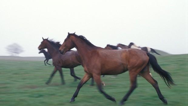 Razlaga sanj: Konj je znamenje človekove zmožnosti, da ukroti naravo! (foto: profimedia)