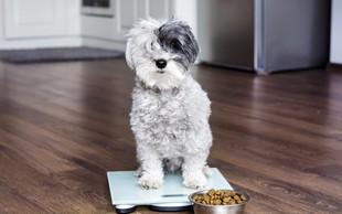 Psi s hrano pridobivajo pomemben vir energije: maščobe oziroma trigliceride