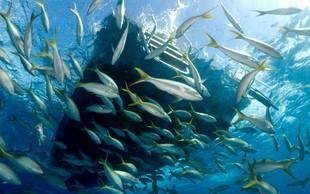 V črevesju živali iz globin oceanov našli koščke plastike!